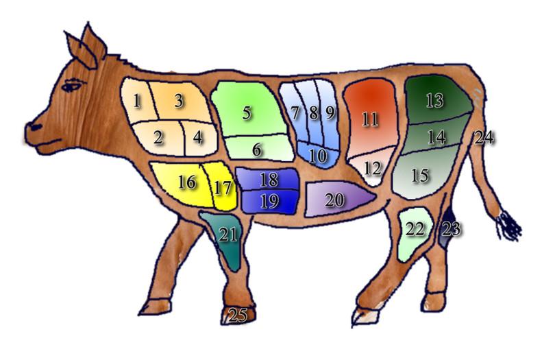Partes del Carne